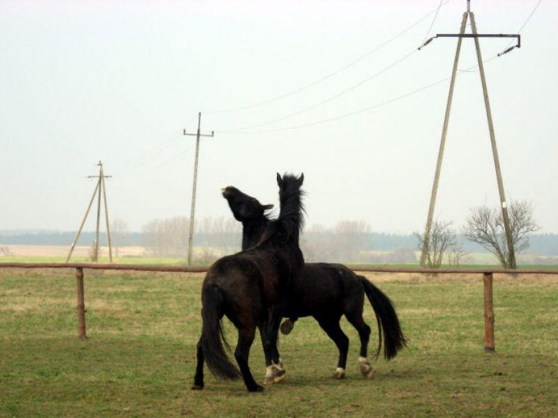 konie-1-20121108-14984261589E42089F-3613-0266-5096-793CED4AB633.jpg