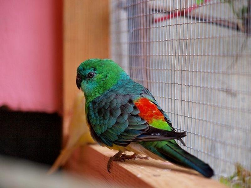 papugi-1-20121107-19666645856540D9CC-F974-CF3B-FE8B-0F999CE60C6D.jpg