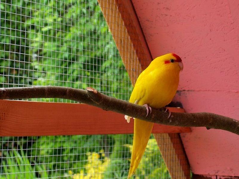 papugi-2-20121107-12108590156E417669-2D54-19C8-1989-4CE6791861DF.jpg