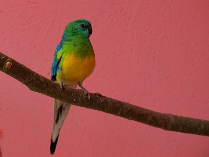 papugi-4-20121107-1759390718AC6635B5-7027-9B3F-7B78-08545F741FC6.jpg
