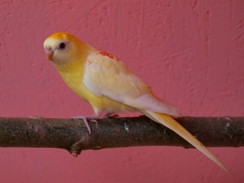 papugi-7-20121107-16718542417305AB71-2F12-B594-517E-42AA660C9620.jpg