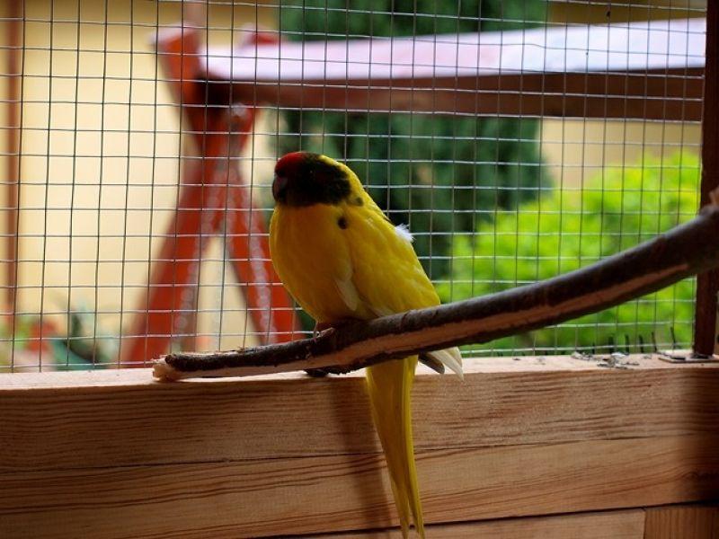 papugi-8-20121107-1921291642D14F0A98-D34F-F235-F63B-2F9A9EED9E8A.jpg